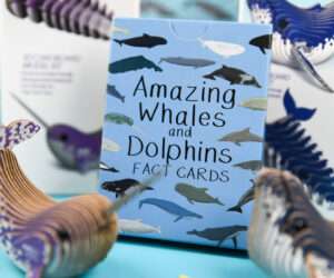 Amazing Whales and Dolphins Fact Cards