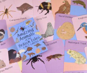 Amazing Animals of the British Isles Fact Cards